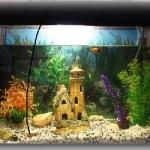 Виды аквариумных рыбок