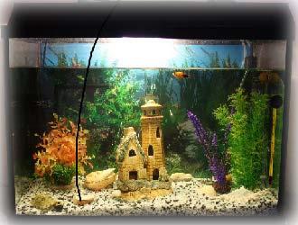 akvariumnye_rybki