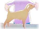 Как подготовить собаку к выставке