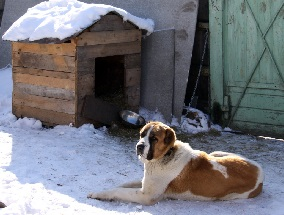 budka-zimoi-foto