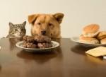 Пищевая аллергия у животных