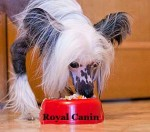 Корм для домашних животных Royal Canin