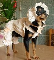 вязаная одежда для собак крючком и спицами