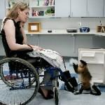 Зоотерапия — эффетивный способ лечения недугов