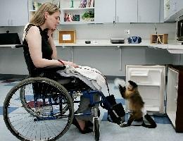 zooterapia-foto