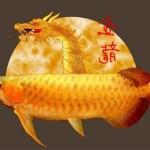 Аравана — рыба дракон