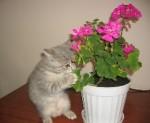 Коты и растения
