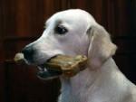 Лакомство для собак: рецепт вкусных и полезных галет