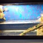 Красивый дизайн аквариума для вашей черепашки