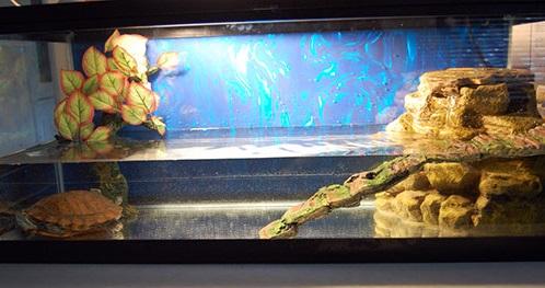 aquarium-dlia-cherepax-foto