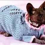 Теплая одежда для кошек