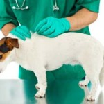 Разрабатывается вакцина против рака у животных