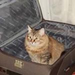 Где оставить животное на время отпуска?