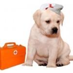 Аптечка для собаки