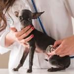 Хроническая тошнота у собак