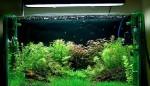 Выбор фильтра для аквариума