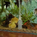Как чистить аквариум?