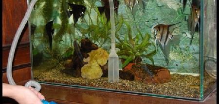 kak-chistit-akvarium-foto