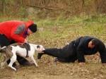 Собака — телохранитель