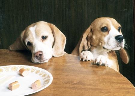 Как отучить собаку выпрашивать еду