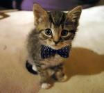 Как назвать котенка?