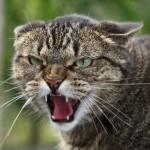 Препараты для коррекции поведения кошек