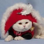 Как выбрать котенка шоу-класса