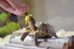 10 мифов о черепахах