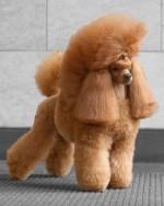 Виды стрижек для собак